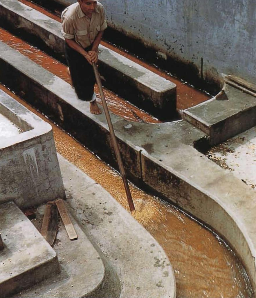 Les fèves entourées de pulpe sont dirigées dans un système de canaux qui les trie selon leur taille et leur poids.