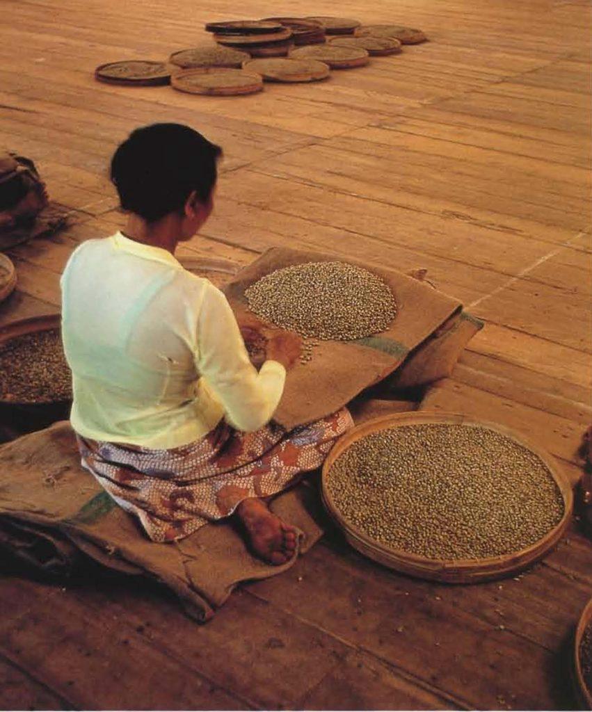 La tâche consistant à trier les fèves lavées est très méthodique.