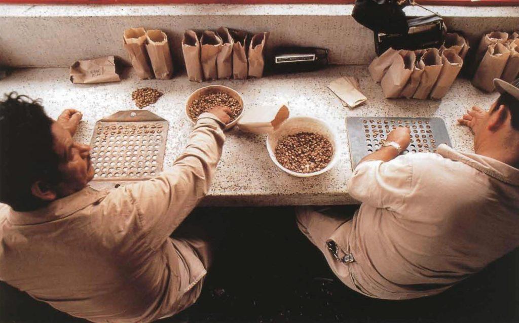 Les trieurs professionnels classent les fèves de café selon leur taille, en les plaçant méthodiquement dans les trous correspondants.