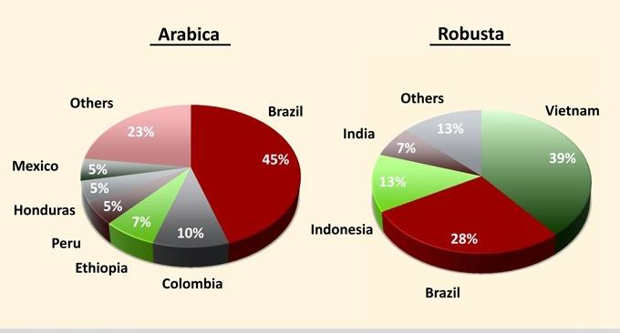 Les différences entre les cafés Arabica et Robusta