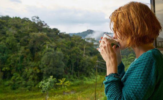 Quelles sont les origines du café ?